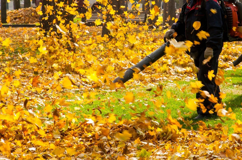 Rimozione foglie